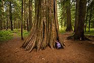 Ross Creek Cedars Scenic Area-Montana