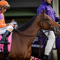 ARCADIA, CA - NOV 4:  Beholder #8, ridden by Gary Stevens wins the Breeders' Cup Distaff, at Santa Anita Park on November 4, 2016 in Arcadia, California. (Photo by Alex Evers/Eclipse Sportswire/Breeders Cup)