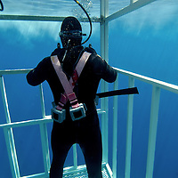 Diver in shark cage / Great White Shark ( Charcaradon carcarias ).Guadalupe Island, Baja California, Mexico, Pacific Ocean.© KIKE CALVO, Isla Guadalupe is located 160 miles off the coast off Baja California and over 220 miles southwest of San Diego in open ocean water that has over 100 feet of visibility. Its rapidly becoming the World's Best Destination to dive with Great White Sharks (Carcharodon carcharias). It hosts one of the most prolific populations of White Sharks on the planet.