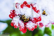 Winter in garden, Austria, Lower Austria, Southern Lower Austria, Eggendorf