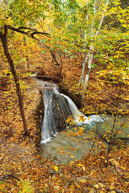 Niobrara Valley Preserve, Nebraska. Spring water falls over bedrock in a cascade on Big Cedar Creek near the Niobrara River. Seeps and springs are prominent along the south side of the Niobrara River valley and run year round, forming narrow canyons while feeding the river and its many small tributaries. These springbranch canyons along the Niobrara are very moist and cool, creating a micro-climate called Pleistocene Refugium by scientists. Within this type of micro-climate, plant species like quaking aspen survive hundreds of miles south of their normal range.