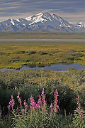 Mt. McKinley (Denali), Fireweed, Fall, Thorofare River, Denali National Park, Alaska. Digital original ©Robin Brandt #2006_3103