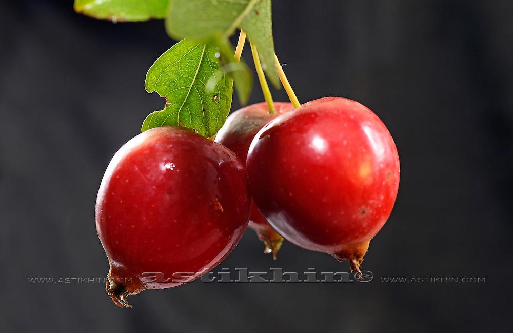 Chinese apple - Malus prunifolia.