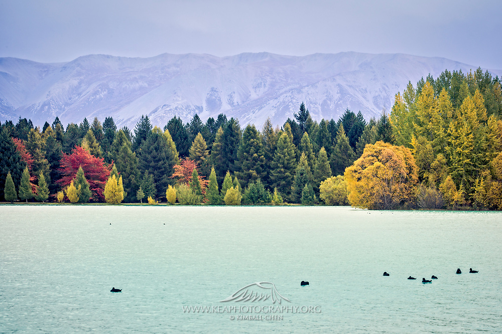 Autumn colors grace the shoreline at Lake Ruataniwha, a world class rowing venue, and a recreational asset for power boating, wind-surfing, fishing, and waterskiing.