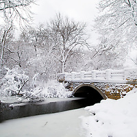 Heavy snow hangs on trees and bushes near Wingra Creek after 14-inches of snow blanked the Madison, Wisconsin area December 9, 2009.