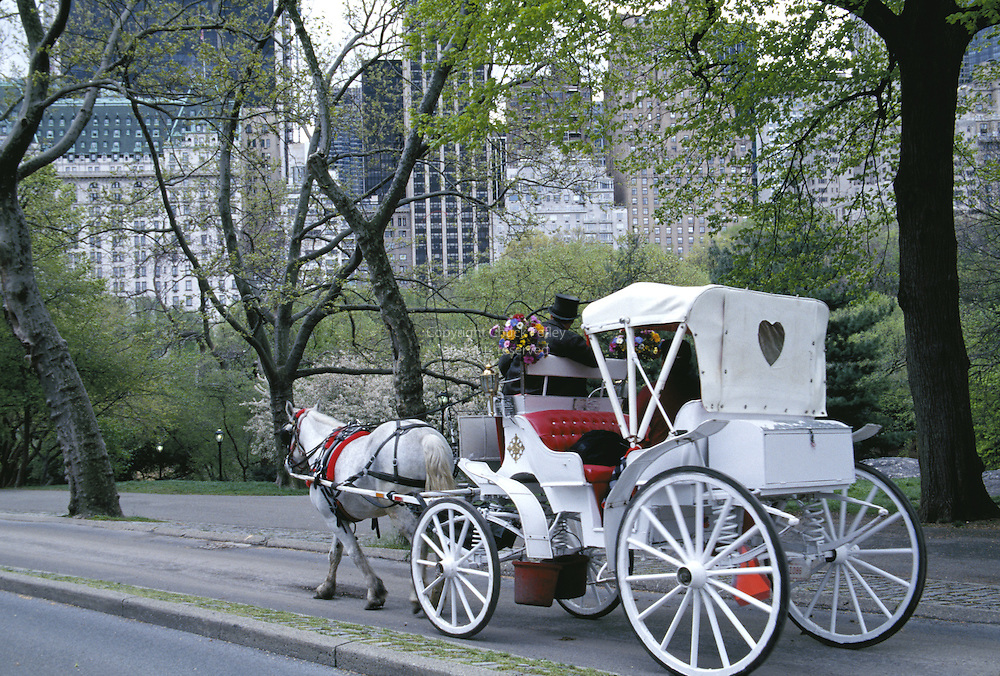 carriage ride in central park new york city ny chuck pefley designs. Black Bedroom Furniture Sets. Home Design Ideas