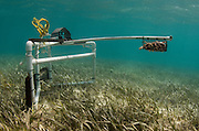 BRUV (Baited remote underwater video) monitoring<br /> Minimal or non invasive research of large marine fish, sharks, rays &amp; turtles.<br /> MAR Alliance<br /> Lighthouse Reef Atoll<br /> Belize<br /> Central America
