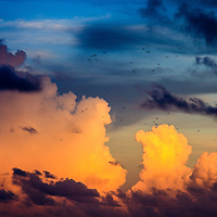 A flock of birds flies across the sky while majestic towering cumulus clouds glow in warm sunlight in the background.