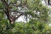 Cheniere au Tigre, Vermilion Parish, Louisiana