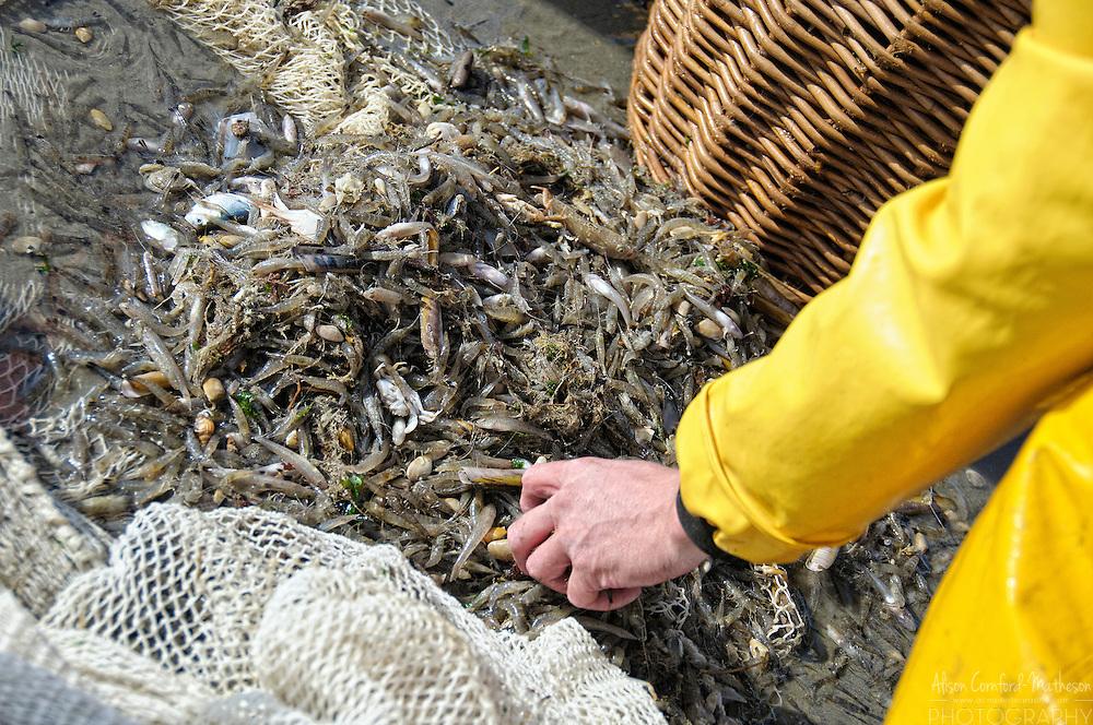 Belgium's UNESCO protected Shrimp Fishermen on Horseback at Oostduinkerke, in Flanders, Belgium. For more information, please visit http://cheeseweb.eu/2013/05/shrimp-fishing-horseback-oostduinkerke-belgium/