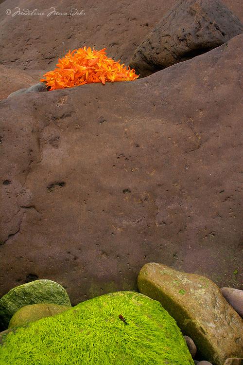 Irish Montbretia Flower Heads and Rocks, / fa041