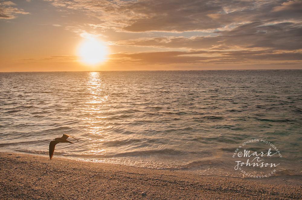 Sunrise, Lady Elliot Island, Great Barrier Reef, Queensland, Australia