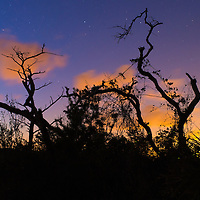 Scrubland trees and shrubs silhouetted against the night sky at Jonathan Dickinson State Park, Hobe Sound (Jupiter), Florida.
