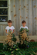 Brothers holding peanuts from harvest, Hydro, Oklahoma, MODEL RELEASED