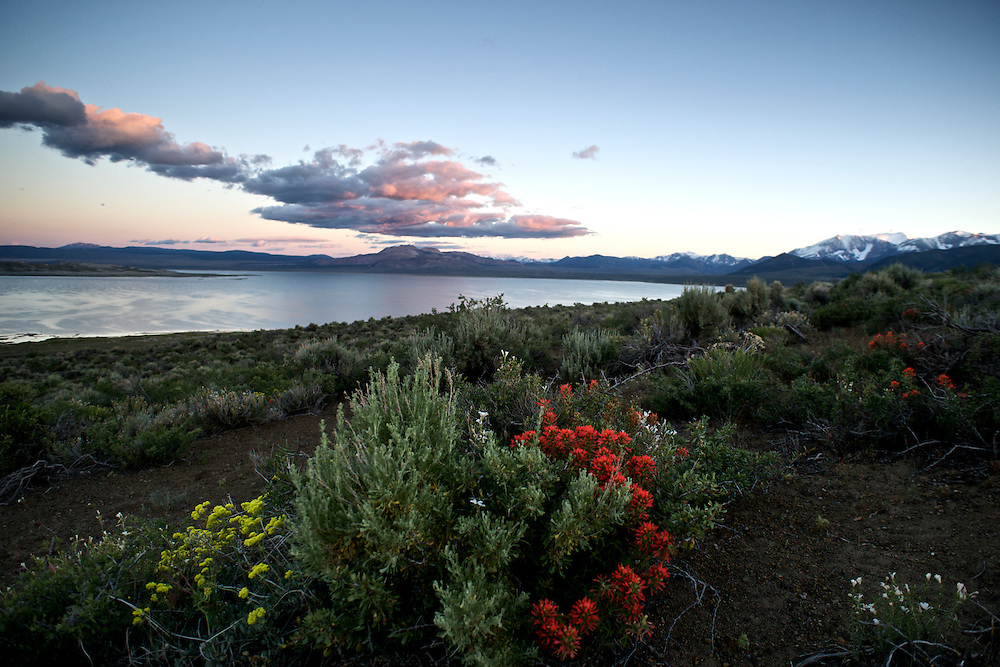 Indian Paintbrush and Sulphur Buckwheat adorn the north shore of Mono Lake in California's Eastern Sierra.