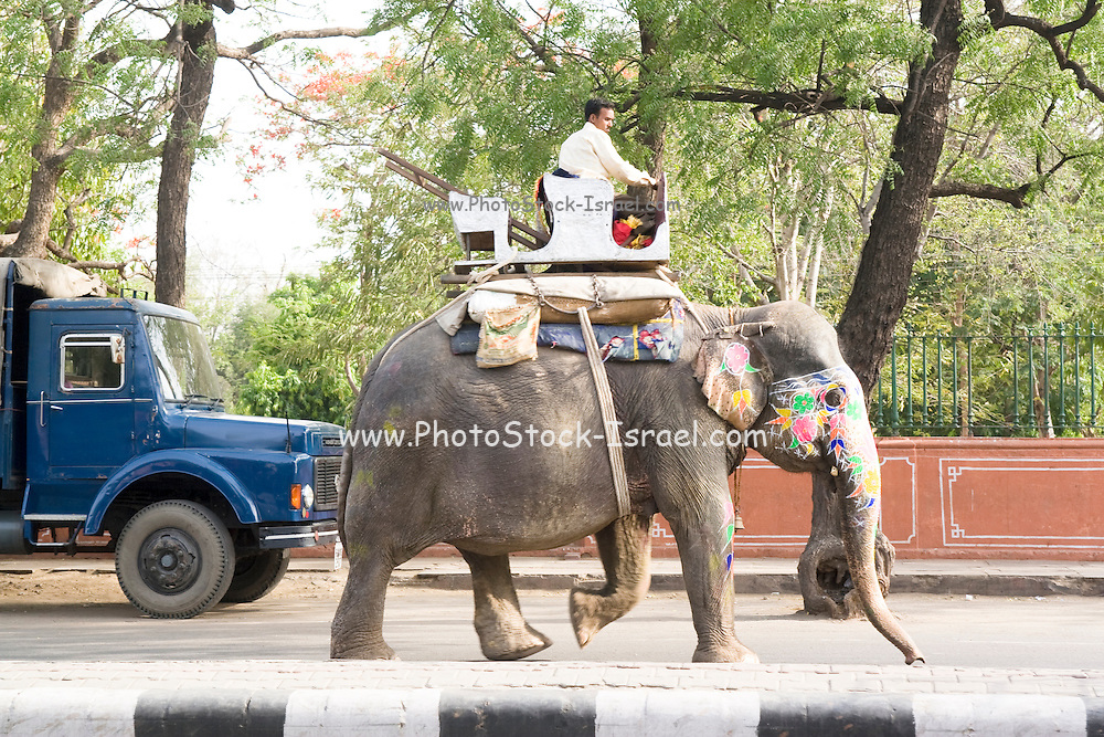 India, Rajasthan, Jaipur. An Elephant in Downtown