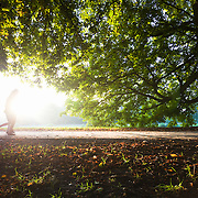 Joggers under a tree in the morning sun