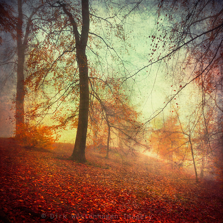 Misty day in a nearby par - texturized photograph.<br />