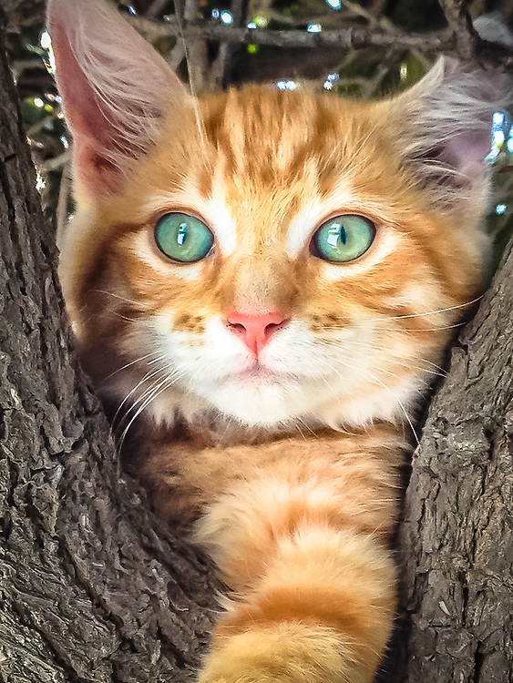 Cute orange and white tabby kitten in a tree