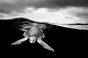 Mexico, Guerrero, Ixtapa. Half and half image of a sea turtle swimming beneath the waves with a cloudy sky some 10 miles off the coast.