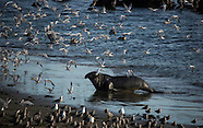 Viewing Elephant Seals