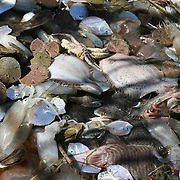 Sea creatures netted as a result of shrimping in the South Georgia Intercoastal Waterway.