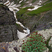 Wildflowers at 12,500 feet. Pilot knob and other mountains surround the basin. Ice Lakes Basin, Colorado