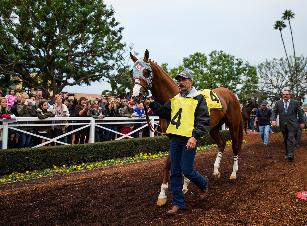 January 09, 2016: California Chrome and Victor Espinoza walk in the paddock before the San Pasqual Stakes at Santa Anita Park, Arcadia CA. Evers/ESW/CSM