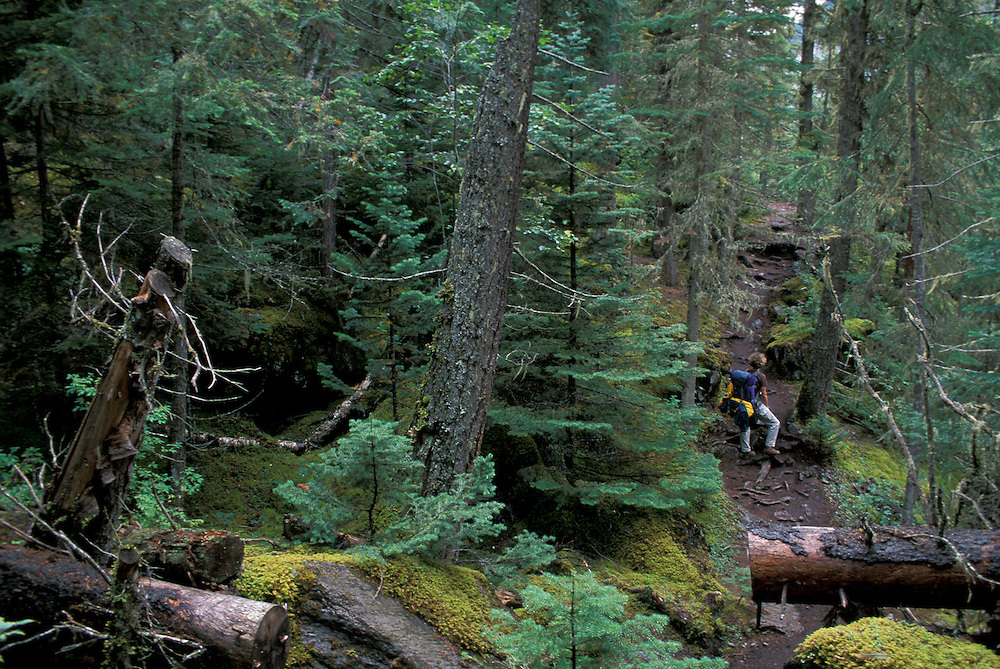 Forest, Berg Lake Trail, Mount Robson Provincal Park,British Columbia,Canada