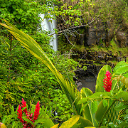Lovely Rainbow Falls in Wailuku State Park on the edge of Hilo, Hawaii.