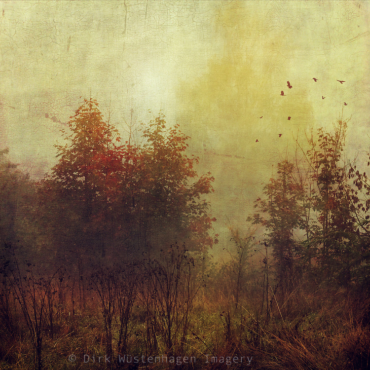 View of a meadow with weeds and trees on a misty fall morning - textured photograph<br />