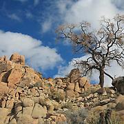 Desert Oak Large Rock Hill Wide View