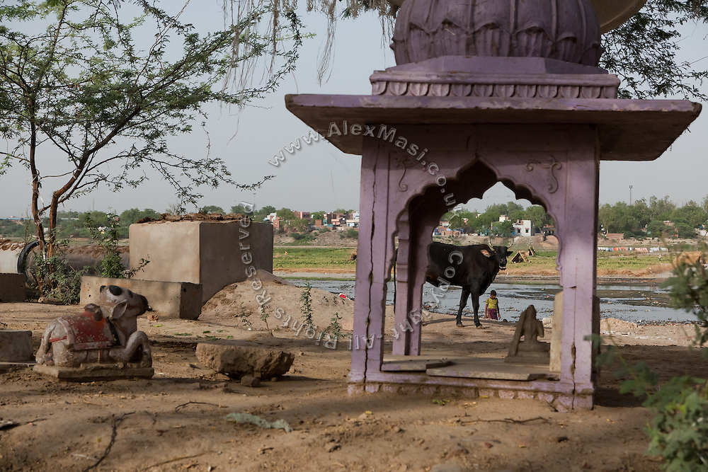 Hindu religious icons and a cow photographed on a bank of the heavily polluted and semi-dry Yamuna River next to the Taj Mahal, in Agra.
