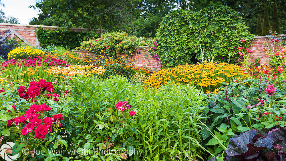 Roses, heleniums, monarda, hemerocallis, lilies and clematis are just some of the plants in the vibrant Lanhydrock Garden section of Wollerton Old Hall Garden, Shropshire.