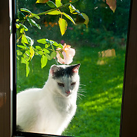 Our cat Dexter looking in through the window.