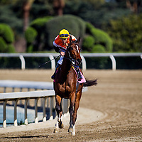 Diversy Harbor with Gary Stevens aboard wins the China Doll Stakes at Santa Anita Park on March 8, 2014 in Arcadia, California. (Photo by Evers/Eclipse Sportswire)