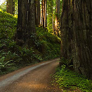 Prairie Creek Redwoods State Park, road, California