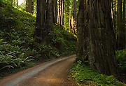 Prairie Creek Redwoods State Park, road, California