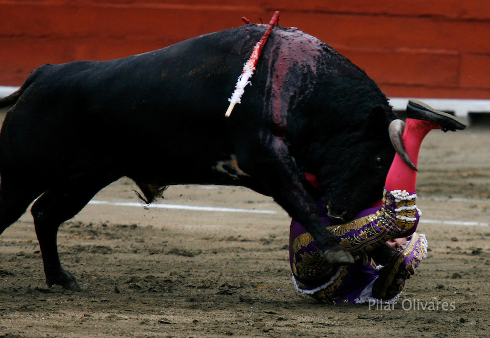 Spanish bullfighter Eduardo Gallo is tackled by a bull during a bullfight at the Plaza de Acho bullring in Lima October 28, 2007.