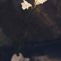 Natural Ikebana flower arrangement in earth elements.