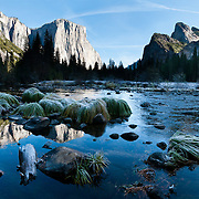 The granite monolith of El Capitan reflects in Merced River at Valley View. El Capitan rises 3000 feet (900 m) above Yosemite Valley floor to 7569 feet elevation in Yosemite National Park, California, USA. Rock climbers flock from around the world test themselves on the huge granitic face. Designated a World Heritage Site by UNESCO in 1984, Yosemite is internationally recognized for its spectacular granite cliffs, waterfalls, clear streams, Giant Sequoia groves, and biological diversity. 100 million years ago, El Capitan and the entire Sierra Nevada crystallized into granite from magma 5 miles underground. The range started uplifting 4 million years ago, and glaciers eroded the landscape seen today in Yosemite. Panorama stitched from 4 overlapping photos.