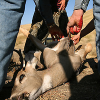 Nathan Shepherd, 17, of Horseshoe Bend, killed a three-by-two, white-tail buck in the hills above Gardena early on Saturday morning, the first weekend of the 2006 deer hunting season.