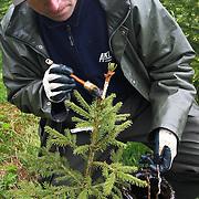 Forestry in Norway. Skogsdrift i Norge, Trøndelag.