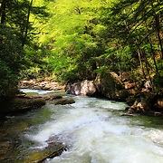 &quot;Let there be Light&quot;<br /> <br /> Mid morning sunlight streams through the trees and forest at Meadow Run in Ohiopyle State Park! A beautiful large and rapid flowing stream that leads to the Youghiogheny River!<br /> <br /> Laurel Highlands Area of Pennsylvania by Rachel Cohen