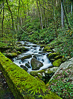Mountain stream along the Roaring Fork Motor Nature Trail in the Great Smokey Mountains National Park.
