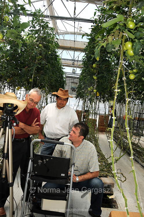 Dr. Gene A. Giacomelli, (left), Dr. Efren Fitz, and Dr. Murat Kacira work on the Greenhouse Tomatoes Cooling Studies at the Controlled Environment Agriculture Center, University of Arizona, Tucson, Arizona, USA.