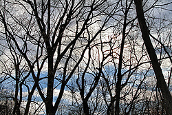 View of bare trees and a cloudy sky.