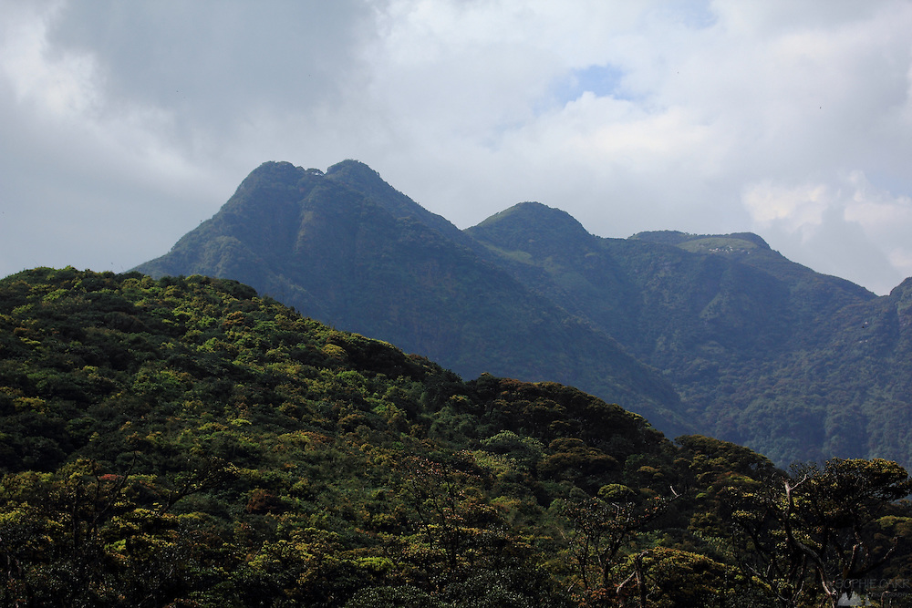 Peaks of the Knuckles Range, not far from Kandy, Sri Lanka's second-largest city, with montane forest in the foreground.