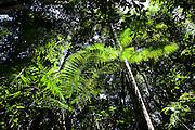 Striving for sun light. Cristalino State Park, Alta Floresta, Mato Grosso Brazil, March 19, 2009.