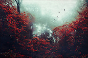Misty and moody forest scenery with red foliage - photomanipualtion<br />